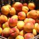 Meruňky na máč