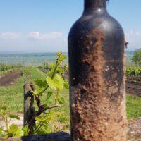 Výprodej ročníkových moravských vín