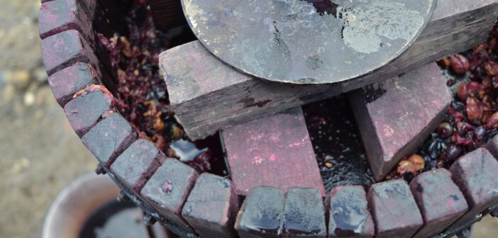 Letmá exkurze do procesu výroby vína