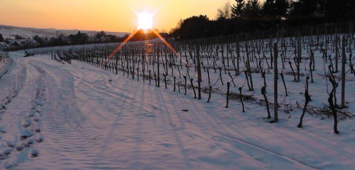 Ledové víno – gurmánský zážitek
