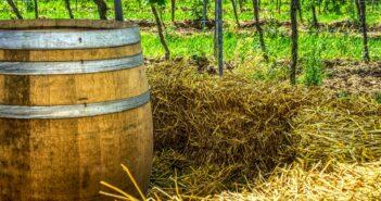Slámové víno – kvalita na prvním místě