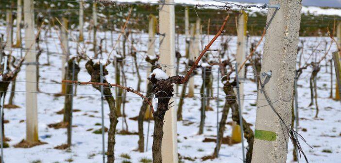 Mráz ohrožuje francouzské vinice a české sady