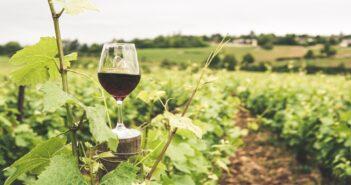 Vinařův rok: Co vše předchází sklence plné vína?