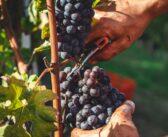 3 tipy na akce, které vám zkrátí čekání na vinobraní